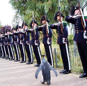Penguin Salute.jpg