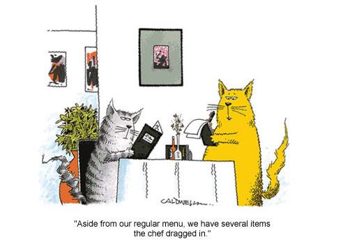Cat Waiter.jpg