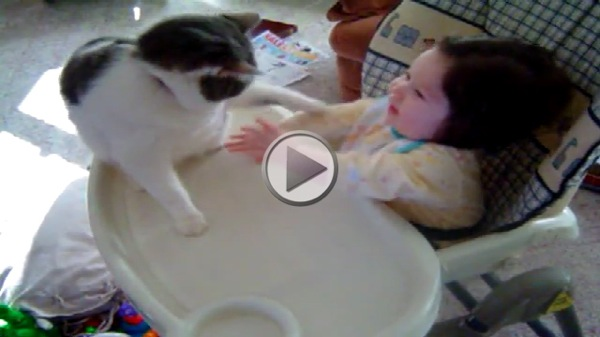 Cat Sucker Punches Baby