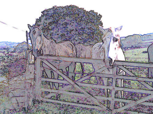 Horses in fields