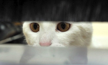 Cat looking through letter box