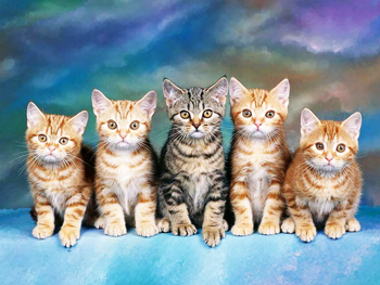 Web Design Kittens