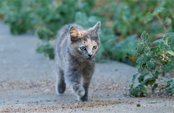 Cat Running