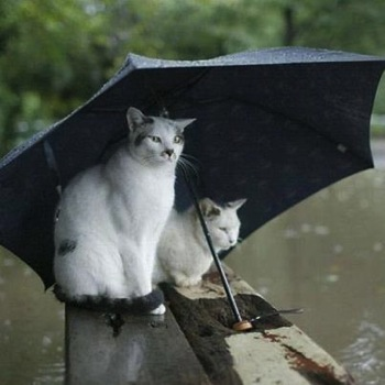 Cats in a Hurricane