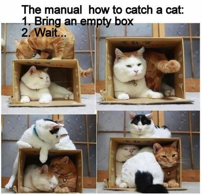 Catch a Cat