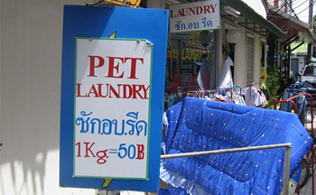 Spruce up your pets today Bangkok