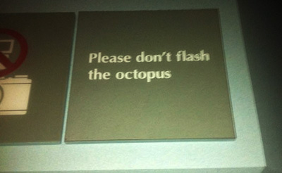 Octopus etiquette from California why do they need to be told