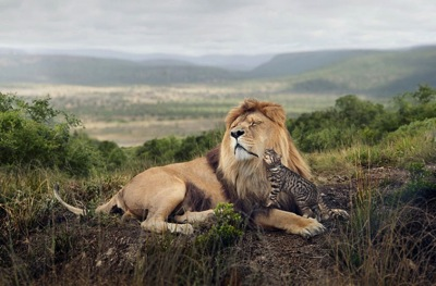 Sony awards  Big Cat Little Cat  an advertising campaign for Whiskas cat food