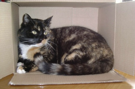Cat in a Box 2