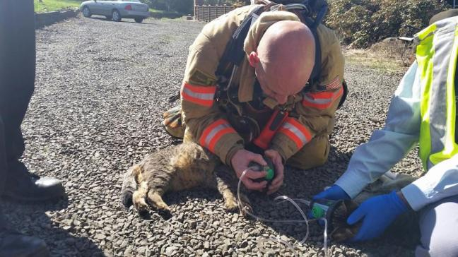 Firefighters resuscitate two cats
