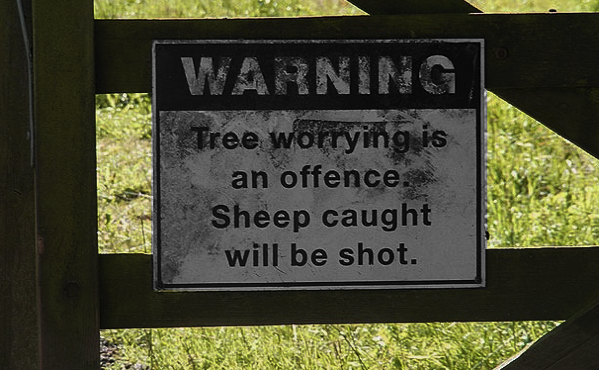 What Have Trees Got Against Sheep