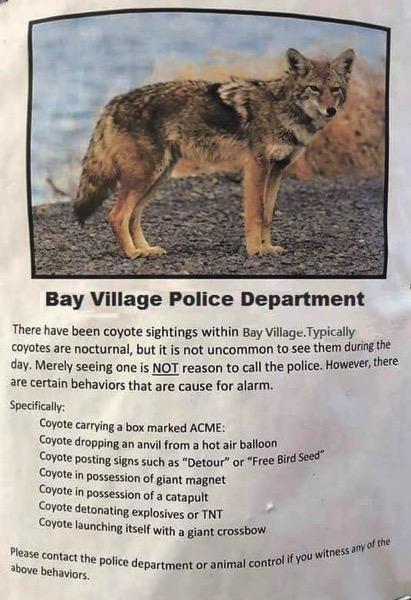 Coyote Alert