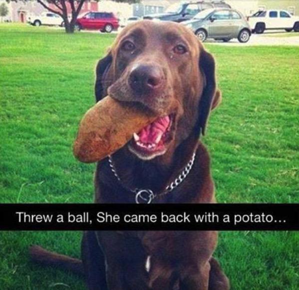 Dim Dog