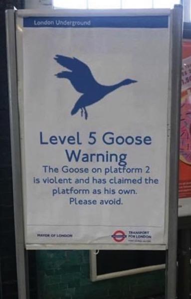Level 5 Goose Warning
