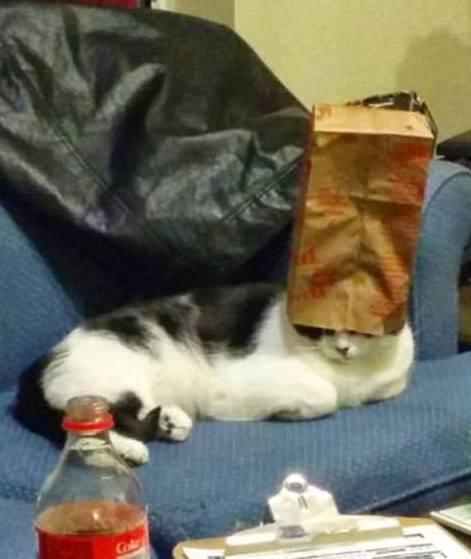 Bag Puss
