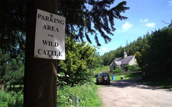 Northumberland care about your cattle