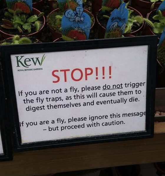 A Message For Flies Only
